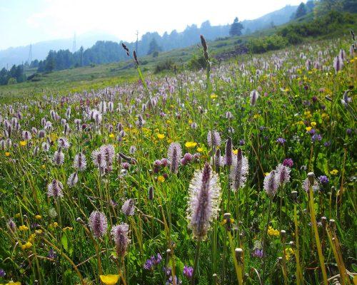 Parco Naturale Val Troncea (3)